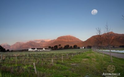 Avondale – Extraordinary Wine Approved by Mother Nature