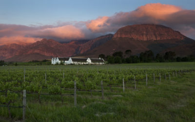DIVERSIFICATION OF CAPE WINELANDS WINE ESTATE ENSURES ITS SUSTAINABILITY AND ONGOING POSITIVE LOCAL IMPACT